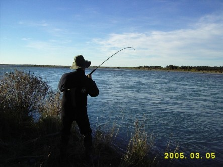 Into a nice fish on the lower Rakaia River